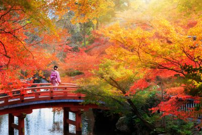 Wooden bridge in the autumn park, Japan autumn season, Kyoto