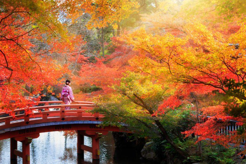 Wooden bridge in the autumn park, Japan autumn season, Kyoto